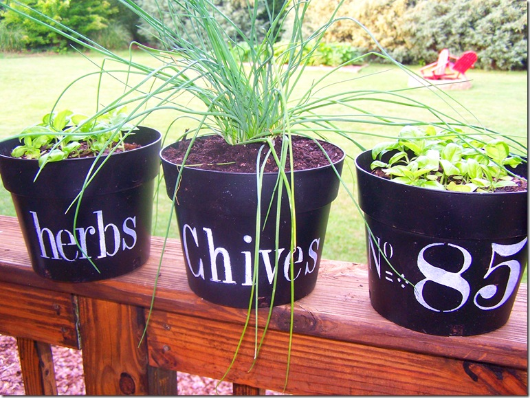 Flower Pots with Chives 015
