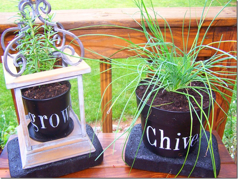 Flower Pots with Chives 027