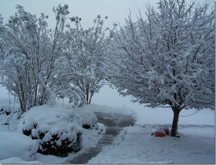 Christmas Snow 2010 003