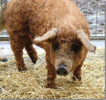 babi 2