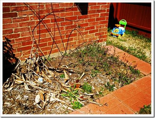 gardening 2010 001