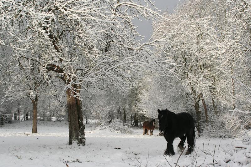 Le  calvados sous la neige... les chevaux s'éclatent! IMG_5538