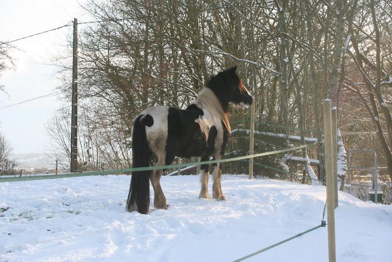 Le  calvados sous la neige... les chevaux s'éclatent! IMG_5172