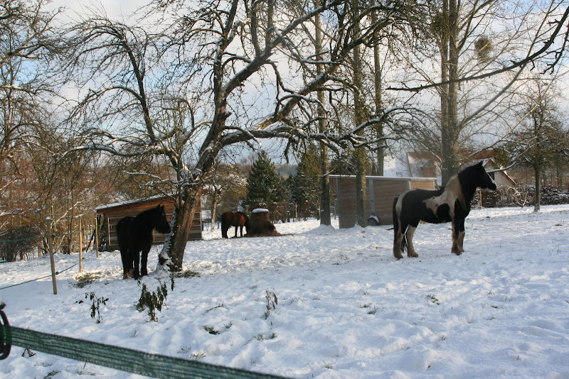 Le  calvados sous la neige... les chevaux s'éclatent! IMG_5160