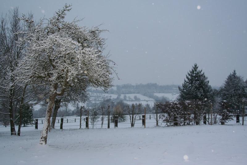 Le  calvados sous la neige... les chevaux s'éclatent! IMG_5062
