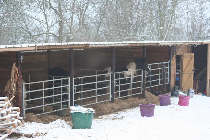 Le  calvados sous la neige... les chevaux s'éclatent! IMG_4920