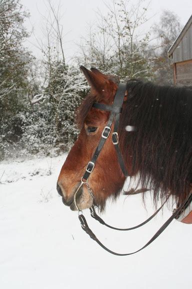 Le  calvados sous la neige... les chevaux s'éclatent! IMG_5083