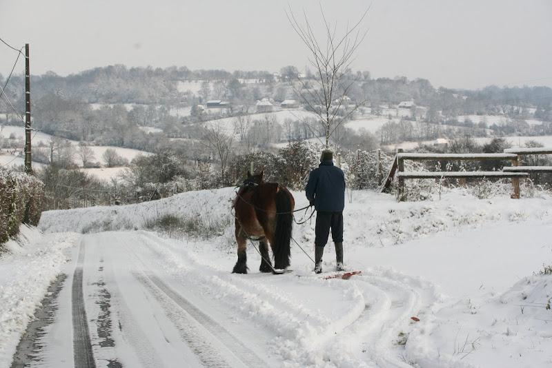 Le  calvados sous la neige... les chevaux s'éclatent! IMG_5133