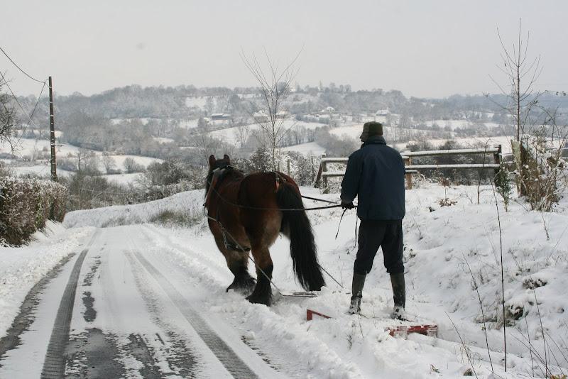 Le  calvados sous la neige... les chevaux s'éclatent! IMG_5127