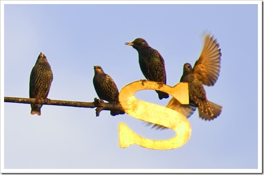 starling landing