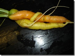 carrotlovers3