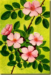 pink-flowers-1