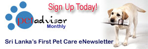 animal clinic newsletter