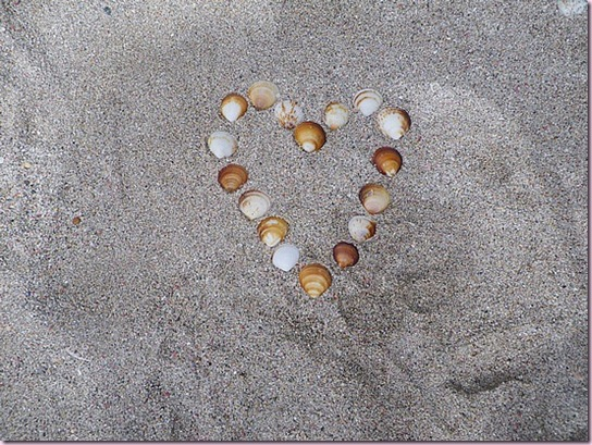 1.1266038228.shells-on-beach