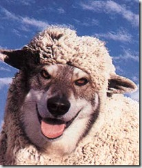 lobo-pele-cordeiro