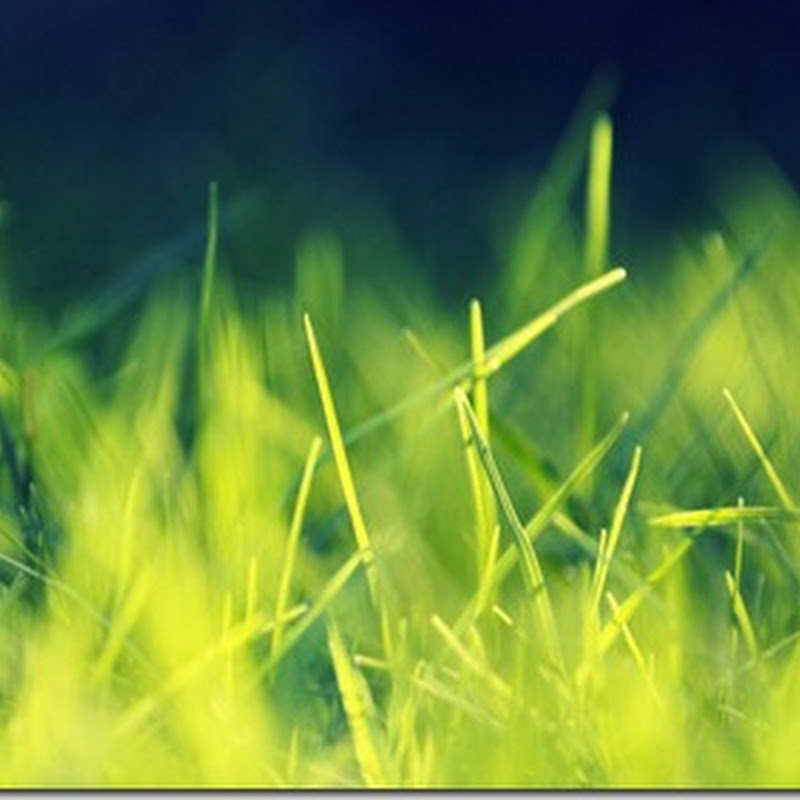 Playing With Sunlight / green grass wallpaper