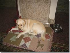 hotel dog photo 1