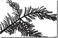 rama pino