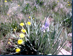 flowers summer 2010 (2)