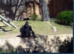 Albq Zoo (4)