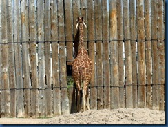 Albq Zoo (14)
