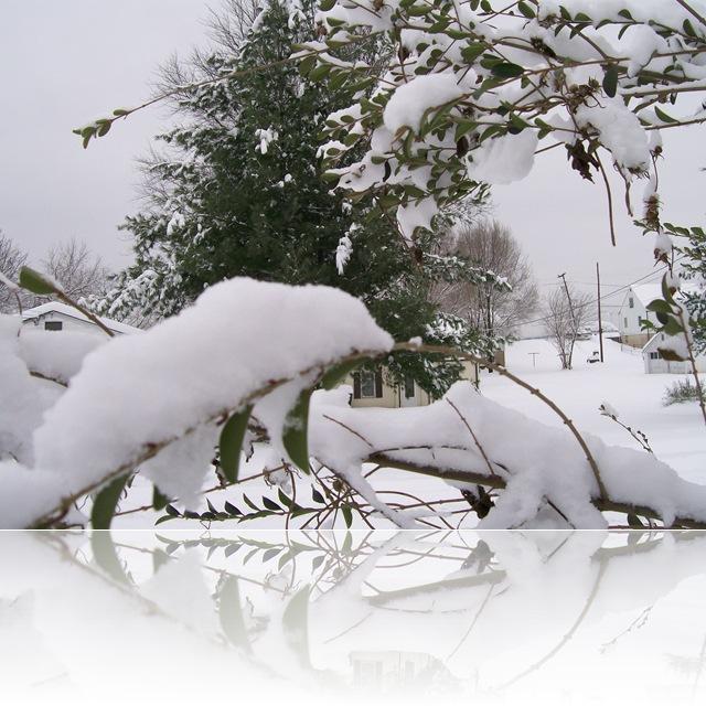 Snow 069