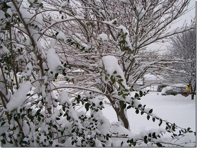 Snow 076
