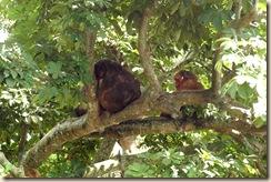 Monkey Island 1