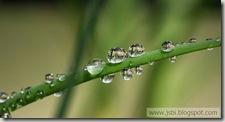 WaterDrops_ROW2687378166