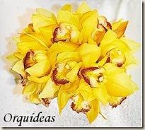 orquideas amarelas_JPG