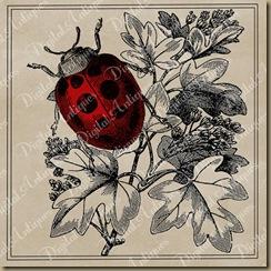 ladybugweb3