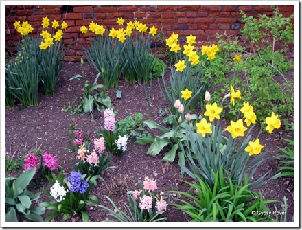 Hyacinths, Daffodils and Tulips in a quiet garden of Kings College grounds Canterbury.