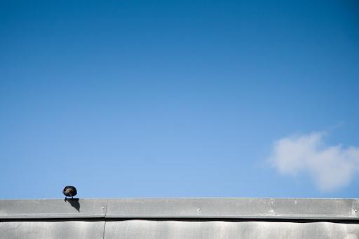 Fågel på tak