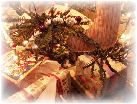 Lola under tree