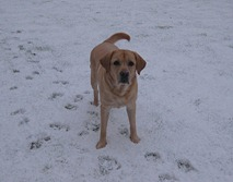 snow & max