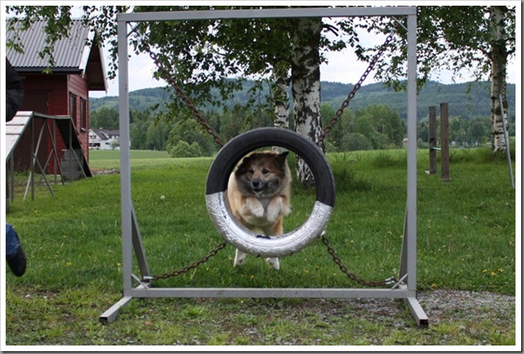 agility-trening_076[5]