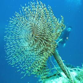üpkurduıç / by Yildirim Gencoglu - Animals Sea Creatures ( T, ve, dalg, tubeworm, and, diver, underwaterphotography, underwater, waterlust, Scuba, scubadiverslife, scubadiving, love, me, natureaddict, Livetoscuba, igers, igaddict, igersturkey, instagood, Instamood, picoftheday, follow, tbt, happy, like4like, sigacik )
