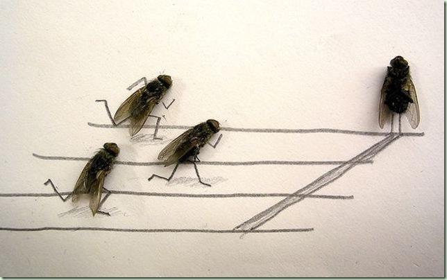 mosca1