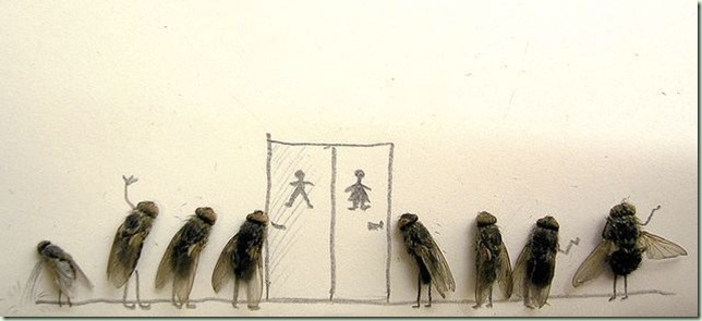 mosca4