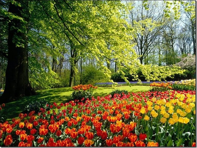 tulip-fields32