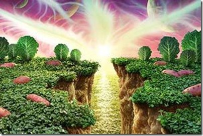 Legumes e Vegetais (4)