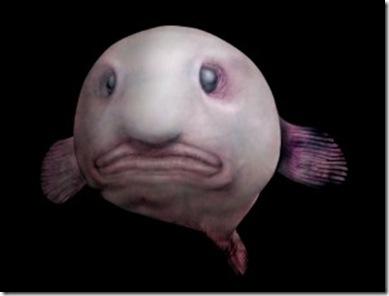 Blobfish_2-300x228