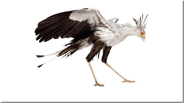 Pássaros-11