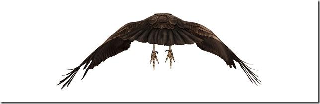 Pássaros-4