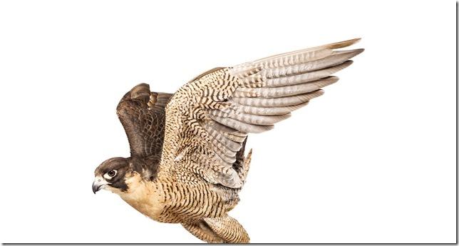 Pássaros-24
