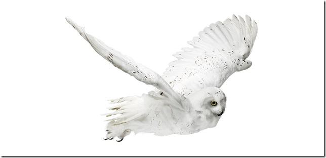 Pássaros-25