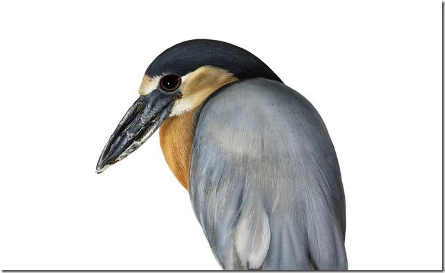 Pássaros-38