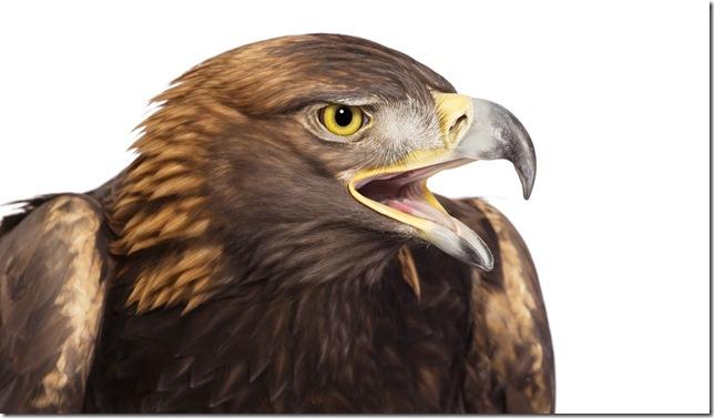 Pássaros-42