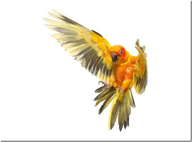 Pássaros-45