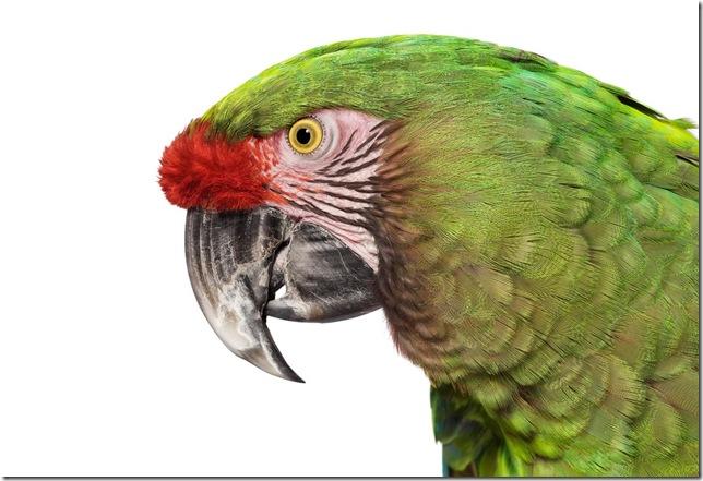 Pássaros-46